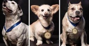 This Dog Show Celebrates The Glory Of Rescue Dogs