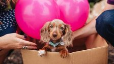15 Dog Reveals That Are Cuter Than Gender Reveal Parties