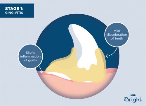 The 4 Stages Of Periodontal Disease In Dogs: A Visual Guide