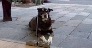 Pizza-Loving Pooch Begs So Often, His Collar Asks People Not To Treat Him!
