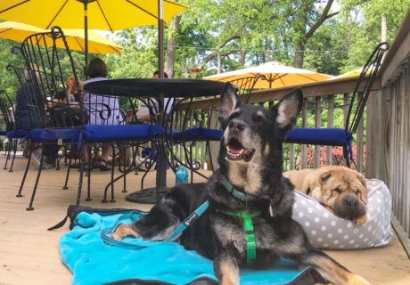 A Guide To Pet Friendly Breweries, Wineries, and Distilleries