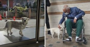 Faithful Dog Waits Outside Her Human's Hospital For 6 Days