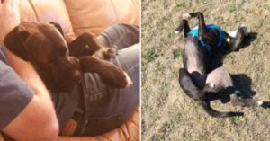 Your Favorite IHD Products Help Give Dogs Like Clyde A Second Chance