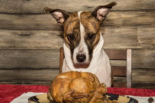 5 Tips for Having a Safe Thanksgiving With Dogs