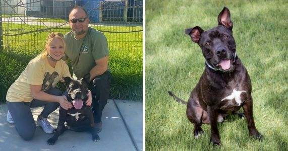 After Spending 667 Days At The Shelter, Melvin Finally Found His Forever Home