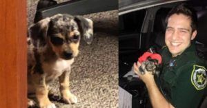 Deputy Rescues Puppy Abandoned During Hurricane Dorian and Adopts Her Into His Family