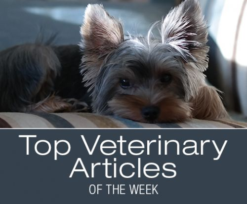 Top Veterinary Articles of the Week: Acute Pancreatitis Management, and more