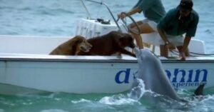 Wild Dolphins Swim Up To Boat To Kiss Their Canine Friends
