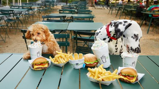 34 Dog-Friendly National Chains Where You Can Take Your Dog To Dinner