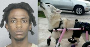 UPDATE: Man Arrested for Death of Zorra the Special Needs Dog