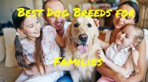 Best Dog Breeds for Families: A Best Friend For All