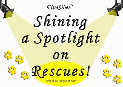 WaitingWednesday Spotlight: Husky House Siberian Husky & Fellow K9 Rescue