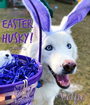 Happy Easter From Our FiveSibes Bunny!