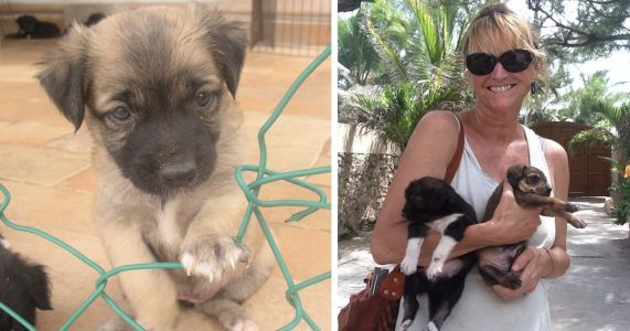 Woman's Tropical Vacation Turns Into A Lifelong Mission To Save Stray Dogs