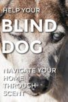 How Can You Help Your Blind Dog Maneuver Your Home through Scent?