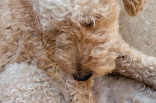 Why Do Dogs Chew Their Feet? And What Should You Do About It?