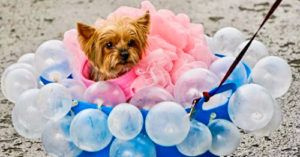 Largest Dog Parade In The World Draws 100's Of Costumed Dogs To New York Park