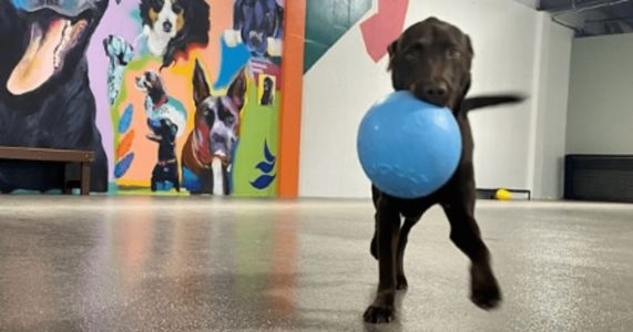 Enjoy A Beer & A Snack While Your Pup Plays At Michigan's First Indoor Dog Park