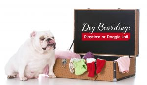 Dog Boarding: 11 Steps to Preparing Your Pooch