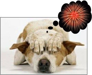 Tips to Keep Your Dog Safe on New Year's Eve