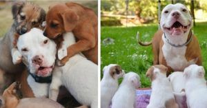 Patient Pooch Has Helped His Mom Foster 200 Rescue Pups
