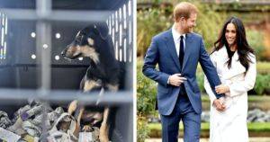 Meghan Markle Helps Raise $12,000 For Dog Rescue