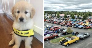 Classic Car Enthusiasts Raise Funds For Blind Teen's Service Dog