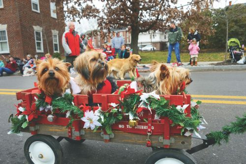Easy Ways to Include Your Dog in December's Festivities