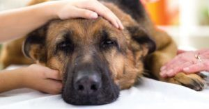 8 Must Know Emergency Dog First Aid Procedures