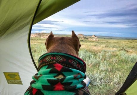 Camping with Dogs - A Beginner's Guide
