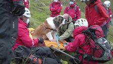 'Embarrassed' St. Bernard Rescued By Team Of 16 From England's Tallest Mountain