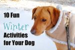 10 Fun Winter Activities for Your Dog