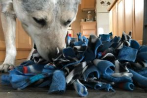 How Snuffle Mats Can Function As Slow Feeders