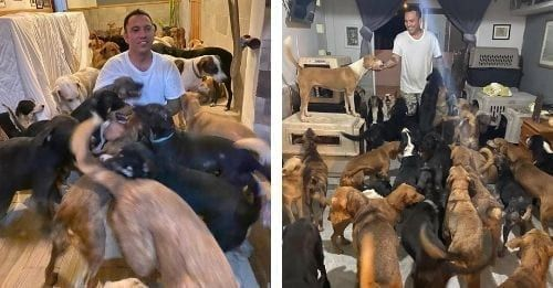 Man Brings 300 Dogs Into His Home To Shelter From Hurricane Delta