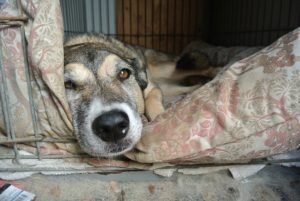 6 Tips For Making Your Dog's Kennel Comfy