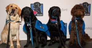 Possible Punishment For Service Dog Fraud Is In The Works