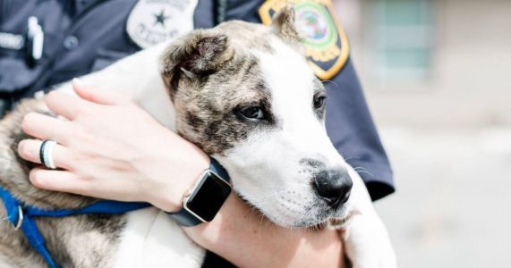 Dog Abused In Viral Video Rescued By Houston SPCA