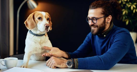 Your Workplace Might Become Pet-Friendly After COVID!