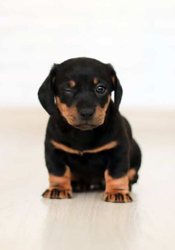 Bathing Tips For Rottweilers To Keep Your Furry Friend Squeaky Clean