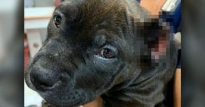 Man Cropped a Litter of Puppies' Ears with Scissors, Now Facing Criminal Charges