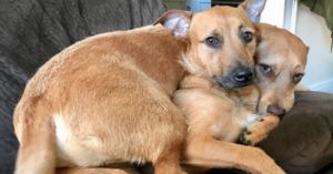 """Clever Dog Convinces Her People To Adopt Her """"Twin"""""""