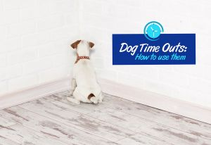 Dog Time Out: How to Use Them