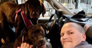 Dogs Missing From Accident Scene Reunited With Family