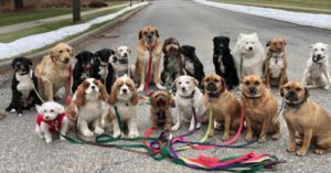 "New York Dog Walkers Take Brilliant ""Pack"" Photographs Everyday"