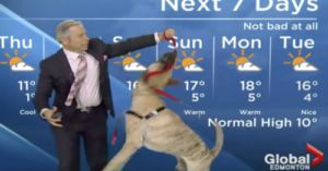 Watch A Weatherman Wrestle With An Adoptable Dog On Live TV