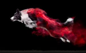 Breathtaking Photo Series Features Canine Athletes Sprinkled With Colored Powder
