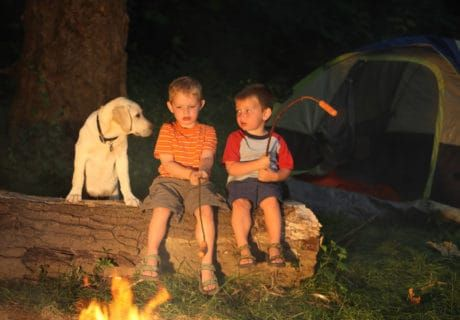 Pet Friendly Campgrounds in America's National Parks: The Complete Guide