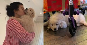 Fans Ask About Disappearing Pets When Kourtney Kardashian Welcomes New Puppy