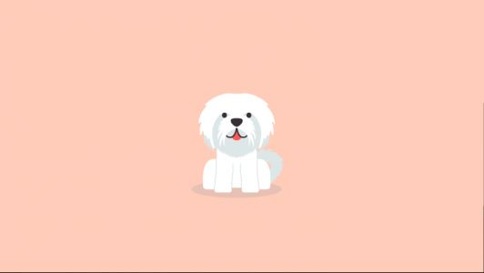 Maltese Vs Bichon Frise - What's The Difference?