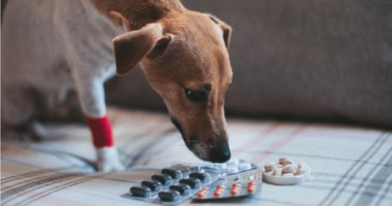 What Can I Safely Give My Dog for Pain?